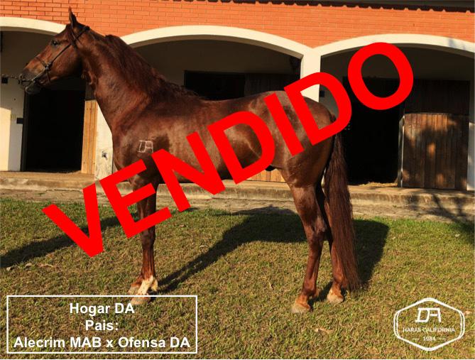 ABCCRM - Associação Brasileira dos Criadores de Cavalo da